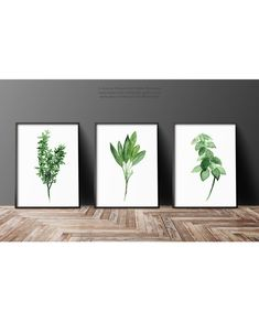 Set of 3 Herbs. Thyme Watercolor Painting Abstract Art. Sage Art Print Gift Idea. Basil Herb Kitchen Decor. Green Wall Illustration Medicinal Plants Chart.  A price is for the set of 3 different Herb Prints. Thyme, Sage and Basil.  Type of paper: Prints up to (42x29,7cm) 11x16 inch size are printed on Archival Acid Free 270g/m2 White Watercolor Fine Art Paper and retains the look of original painting. Larger prints are printed on 200g/m2 White Semi-Glossy Poster Paper.  Colors: Arch...