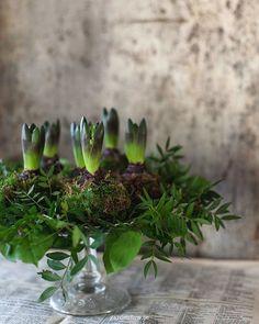 ⊹ ❷ -  ⊹ Glad lördag!Kan inte låta bli att göra några hyacinter svept i mossa varje år. Nytt på bloggen. ⤴︎ ∙ ⊹ ∙  Happy Saturday!I can't resist making a few hyacinths in moss every year. New blogpost. ⤴︎ ∙ ⊹ ∙ #charlottegardenflow #charlotteandersson #gardenflow #hyacinth #hyacinter
