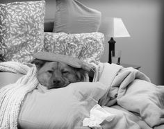 Sick Dog get well soon Your Sick Dog: What You Can Do at Home to Help Your Dog