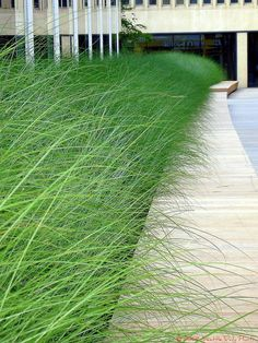 Vertical Garden Design Long bench with grass as background.so beautiful Vertical Garden Design Lon Vertical Garden Design, Garden Landscape Design, Landscape Architecture, Classical Architecture, Ancient Architecture, Sustainable Architecture, Urban Landscape, Landscaping With Rocks, Modern Landscaping