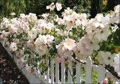 Картинки по запросу разновидность роз фото на английском языке