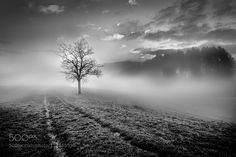 Into the Fog by MarcelKpfer1. Please Like http://fb.me/go4photos and Follow @go4fotos Thank You. :-)