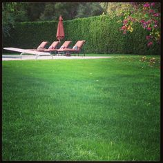 The grass is greener in Palm Springs