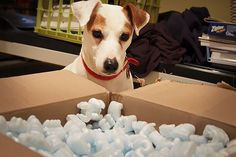 Landfill Nightmares- Shipping Materials: Waste from shipping materials can easily pile up, with all the cardboard boxes, tape, and padding. Stay away from peanut Styrofoam and stick to recyclable insulators like old newspapers, or try biodegradable packing peanuts. TerraCycle's Zero Waste Box accepts used packaging materials and recycles them. http://www.takepart.com/photos/wasteful-packaging/shipping-materials