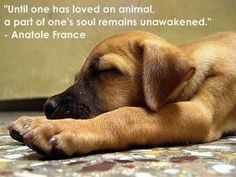 """""""Until one had loved an animal, a part of one's soul remains unawakened."""" Anatole France"""