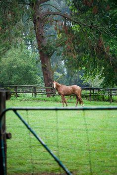 Kwazulu-Natal Midlands (South Africa). #Travel #Photography #horse