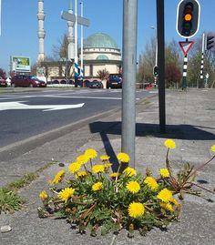 Aelbrechtsplein  foto: Heleen van Zantvoort Rotterdam