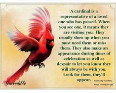 Miss My Mom, I Miss You, Mom And Dad, Estrella Cardinal, Bird Meaning, Red Cardinal Meaning, Cardinal Symbolism, Bird Tattoo Meaning, Animal Symbolism