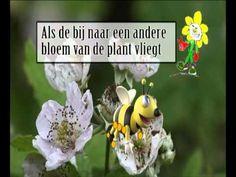 Plantenles - YouTube
