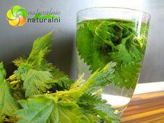 pokrzywa wlasciwosci herbata ocet z pokrzywy jak zrobic lecznicze naturalnie naturalni