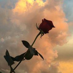 Amor, Love, Passion : Foto