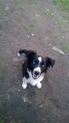 .My.dog.little.Jackie.Love.him,