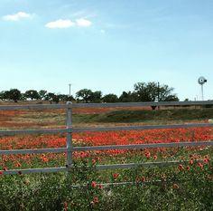 Wildflower Pasture | Llano, Texas