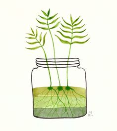 Jar of Fern Sprouts