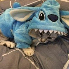 Top 20 Funny animals about Cats Cute Cats And Kittens, I Love Cats, Cool Cats, Kittens Cutest, Kitty Cats, Cute Funny Animals, Cute Baby Animals, Animals And Pets, Funny Cats