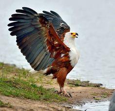Very Nice bird