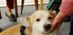 Animal therapies can help reduce many of these symptoms, offering a compelling reason for patients to consider welcoming a furry friend into their home.