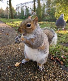 Close Up Squirrels Happy Squirrel, Squirrel Pictures, Wood Animal, Little Critter, Chipmunks, Cute Baby Animals, Spirit Animal, Close Up, Fur Babies