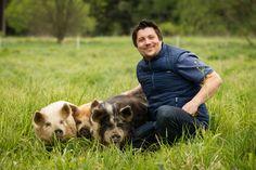 Wir lieben unsere Kune Kune. Animals, Pork, Animales, Animaux, Animal, Animais