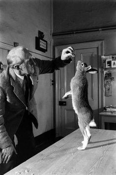 Meet Horace, the housebroken hare, who was taken in by Dublin Zoo director, Cecil S. Webb, in Ireland in the 1950s. Although a wild hare is an unusual house pet, he was just as domesticated and playful as a dog. See more w/ LIFE (photo: Carl Mydans)