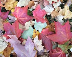 best nyc parks for fall foilage White Oak Tree, Riverside Park, Urban Nature, Prospect Park, Hill Park, Urban Park, Color Magic, Picture Postcards, Autumn Leaves