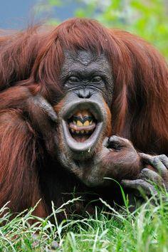 And then floss ...... !!! .... Orangutan