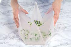 Microgarden Indoor Growing Kit by Tomorrow Machine & INFARM | Yellowtrace