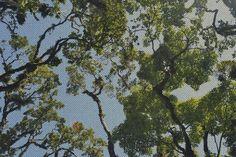 trees's pose