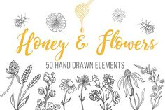 Honey and Organic Sketch Collection by Teresa on @creativemarket