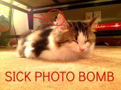 LOL my cats rock.