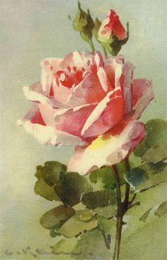 Roses Anciennes en France - Galerie dimages de Roses Anciennes peintes par Catharina Klein