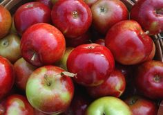 Guide to southeast Michigan apple orchards and cider mills