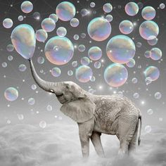 The Simple Things Are The Most Extraordinary (elephant-size Dreams) Artwork Print by Soaring Anchor Designs - SMALL Image Elephant, Elephant Size, Baby Animals, Cute Animals, Baby Hippo, Wild Animals, Blowing Bubbles, Bubbles 3, Rainbow Bubbles