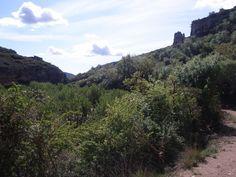 Vegetació del canyó