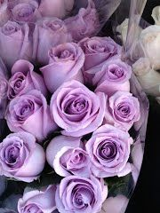 Panoramio - Photo of Gorgeous & Beautiful Purple Roses Flowers Specially for you. Manhattan. New York City. New York. USA.