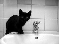 Art Black cat pets-i-want I Love Cats, Cute Cats, Funny Cats, Animals And Pets, Baby Animals, Cute Animals, Fluffy Animals, Crazy Cat Lady, Crazy Cats