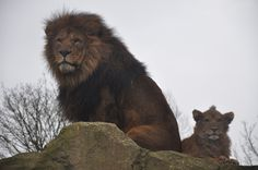 Blackpool zoo trip