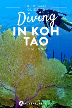 Interested in becoming a certified open water diver in Koh Tao? Here is the ultimate guide which tells you prices, schools, and what to expect!