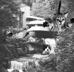 Gallery of The Invasion of Architectural LOLCats - 5
