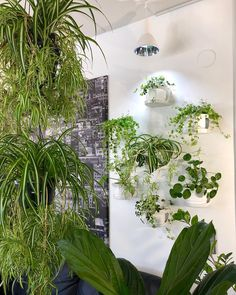wall- and hanging planters