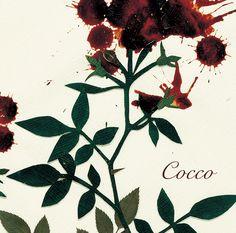 サングローズ   Cocco Official site