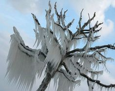 Ice storms, so hard on trees but beautiful to look at