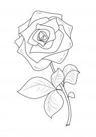 Роза. Рисунок на весь лист