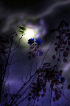 Beautiful Photo of the Moon Beautiful Moon, Beautiful World, Beautiful Images, Beautiful Roses, Natur Wallpaper, Shoot The Moon, Moon Pictures, Belle Photo, Night Skies