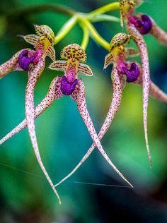 Orchid                                                                                                                                                      Más                                                                                                                                                     Más