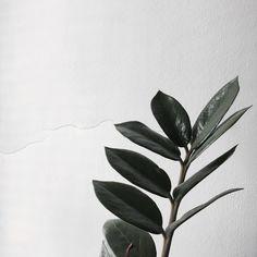 #flora #selfart