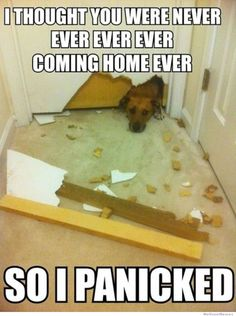 Fellow owners of destructive dogs, I so feel your pain. This is exactly what I wonder goes through my Newfoundland's, Nana, mind while we are gone since EVERY time we leave her alone we come home to a mess.