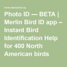 Photo ID — BETA | Merlin Bird ID app – Instant Bird Identification Help for 400 North American birds