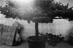 08 Jing Huang for Leica