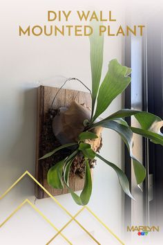 Running out of space for your indoor potted plants? Try out this super simple DIY wall mount! Tap for instructions. Simple Diy, Super Simple, Easy Diy, Potted Plants, Indoor Plants, Air Plants, Inside House Plants, Easy Crafts, Diy And Crafts